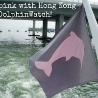 Hong Kong DolphinWatch: pink dolphin tour review