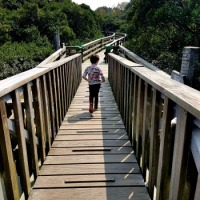 Hong Kong Wetland Park review: kid-friendly fun in the northern New Territories