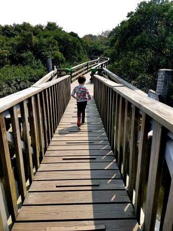 Hong Kong Wetland Park Boardwalk