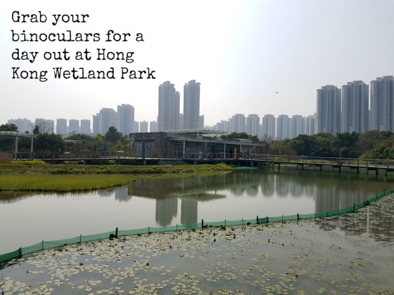 HK Wetland Park with kids