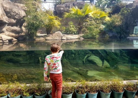Hong Kong Wetland Park Pui Pui